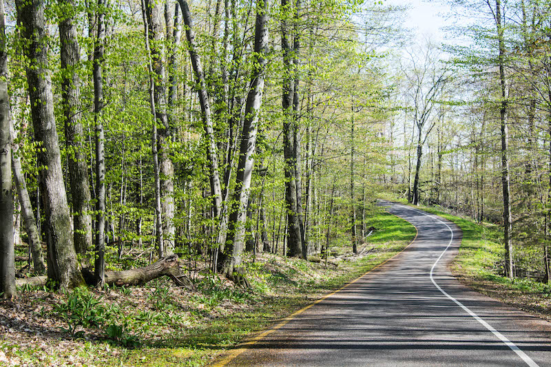The winding turns of Pierce Stocking Scenic Drive