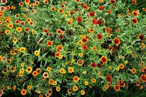 pot-flowers